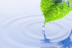 Leaf_ripple