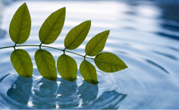 iStock_000007705499XSmall-leaves_in_water[1]